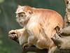 20130612_Bronx Zoo_960
