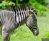 20130612_Bronx Zoo_806