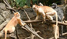 20130612_Bronx Zoo_924