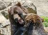 20130612_Bronx Zoo_365-Edit2
