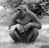 20130612_Bronx Zoo_627-Edit