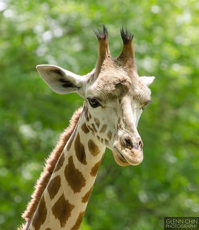 20130612_Bronx Zoo_486
