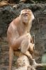 20130612_Bronx Zoo_1035
