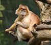20130612_Bronx Zoo_946