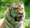 20130612_Bronx Zoo_154
