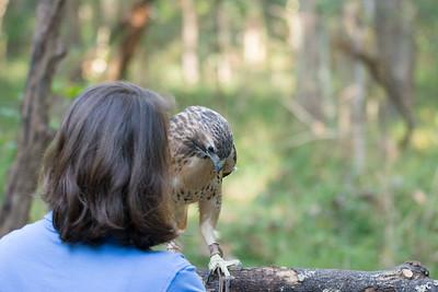 Blue Ride Wildlife Center