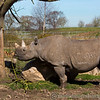 Chester Zoo 25-03-17  0012