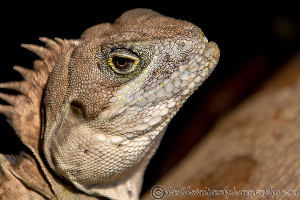 IMAGE: https://photos.smugmug.com/Animals/Zoos/Chester-Zoo-25-03-17/i-W3Lg6Dt/2/XL/Chester%20Zoo%2025-03-17%20%200051-XL.jpg