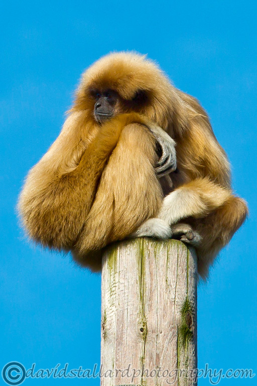 IMAGE: https://photos.smugmug.com/Animals/Zoos/Chester-Zoo-25-03-17/i-cCzH75j/2/XL/Chester%20Zoo%2025-03-17%20%200110-XL.jpg