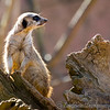 Chester Zoo 25-03-17  0006