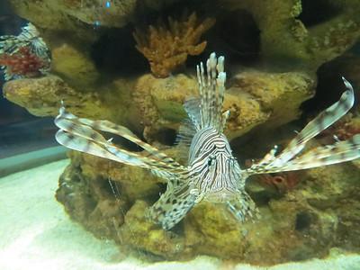 Cleveland Aquarium