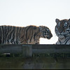 Colchester Zoo 09-11-19 0009