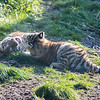 Colchester Zoo 09-11-19 0033