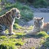 Colchester Zoo 09-11-19 0038