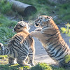 Colchester Zoo 09-11-19 0039