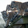 Colchester Zoo 09-11-19 0022