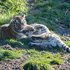 Colchester Zoo 09-11-19 0031