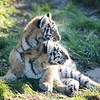 Colchester Zoo 09-11-19 0026