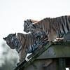 Colchester Zoo 09-11-19 0021