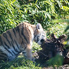 Colchester Zoo 09-11-19 0025