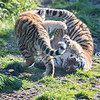 Colchester Zoo 09-11-19 0035