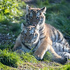 Colchester Zoo 09-11-19 0028
