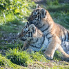 Colchester Zoo 09-11-19 0029