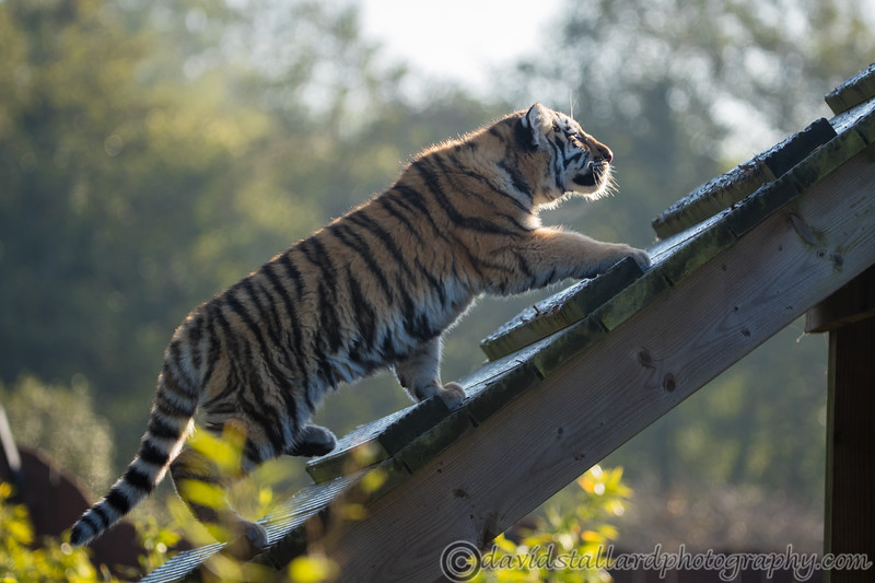 Colchester Zoo 09-11-19 0007