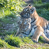 Colchester Zoo 09-11-19 0030