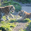 Colchester Zoo 09-11-19 0037