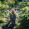 Colchester Zoo 09-11-19 0006