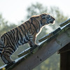 Colchester Zoo 09-11-19 0008