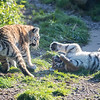 Colchester Zoo 09-11-19 0036