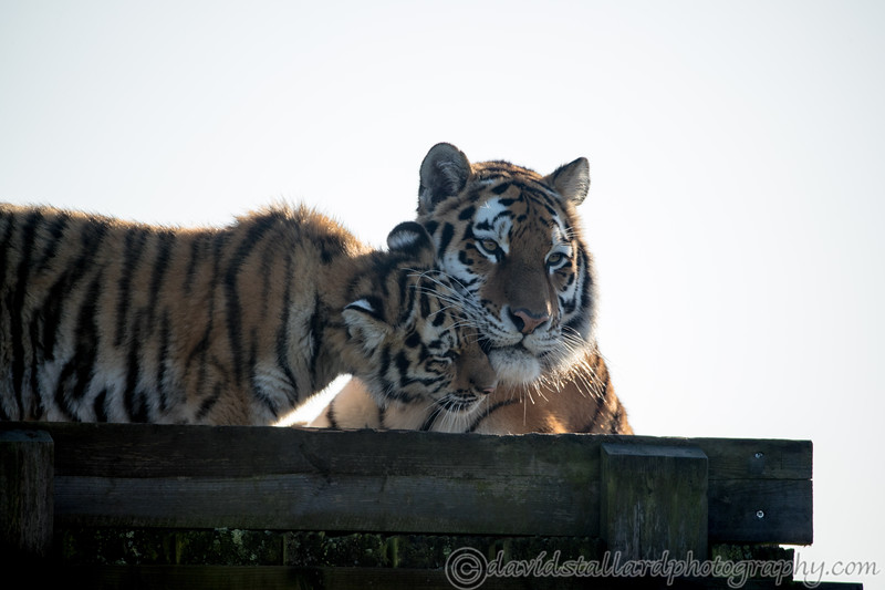 Colchester Zoo 09-11-19 0012