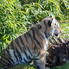Colchester Zoo 09-11-19 0024
