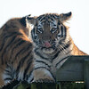 Colchester Zoo 09-11-19 0023