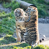 Colchester Zoo 09-11-19 0040