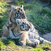 Colchester Zoo 09-11-19 0027