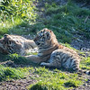 Colchester Zoo 09-11-19 0032