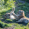 Colchester Zoo 09-11-19 0034
