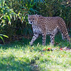Colchester Zoo 18-11-12  030