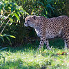 Colchester Zoo 18-11-12  034