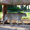 Colchester Zoo 18-11-12  033