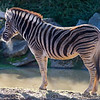 Colchester Zoo 18-11-12  026