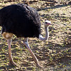 Colchester Zoo 18-11-12  029