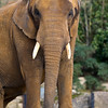 Colchester Zoo 20-12-14  038