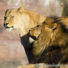 Colchester Zoo 20-12-14  021