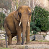 Colchester Zoo 20-12-14  037