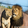 Colchester Zoo 20-12-14  026