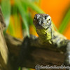 Colchester Zoo 20-12-14  056